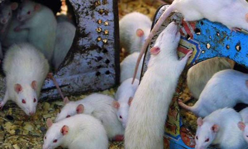 Rats kill 8-month-old child
